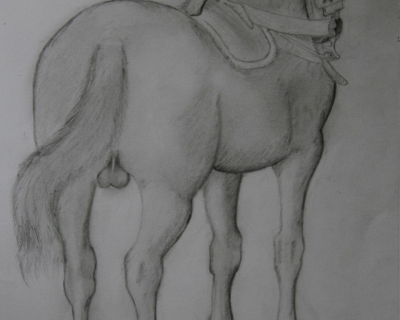 Cheval vu de dos en dessin traditionnel